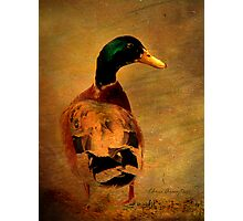A duck ... Photographic Print