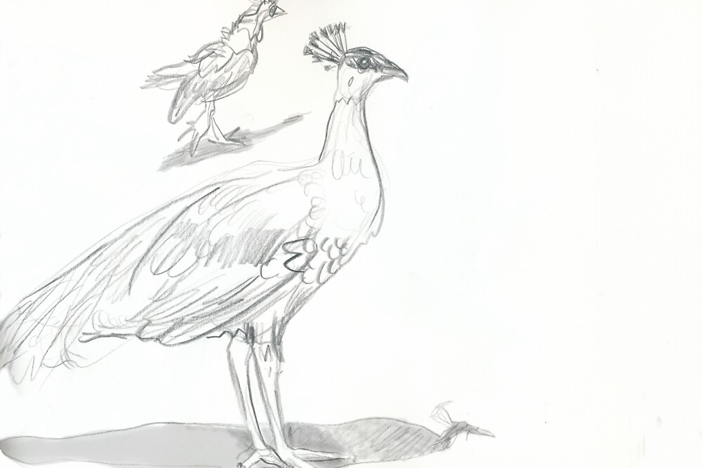 Standing Peahen, Running Chick by WoolleyWorld