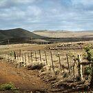 The Road to Waimea by Ellen Cotton
