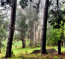 Tranquility - Mt Wilson NSW Australia by Bev Woodman