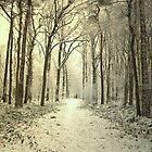 Winter Forest by ienemien