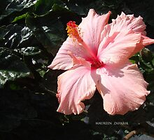 flower peach by Maureen Zaharie