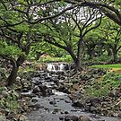 Queen Lili'uokalani Botanical Garden by Clark Thompson