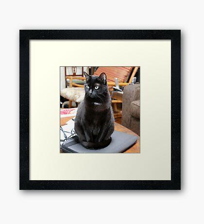 laptop cat Framed Print