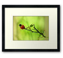 Red flower bud Framed Print