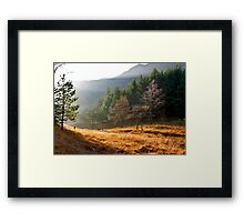 Mist in the Woods Framed Print