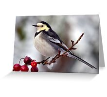 Winter Wagtail Greeting Card