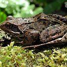 Friendly Frog by AnnDixon