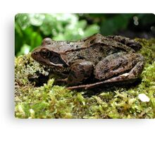 Friendly Frog Canvas Print