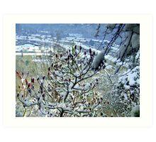 Winter Valley! Art Print