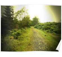 A Lonely Forest Path Poster
