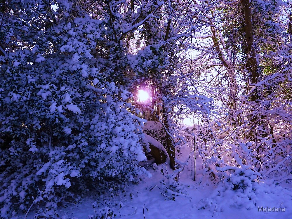 Winter wonderland by Meladana