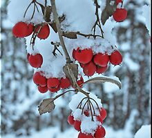 CHRISTMAS RED BERRY'S by shaun-e
