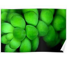 Green in Nature Poster
