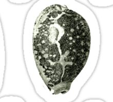 Vintage Seashells Sticker