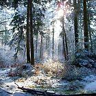 New Forest in Winter by Gordon Hewstone