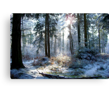 New Forest in Winter Canvas Print