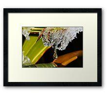 Icy Tears Framed Print