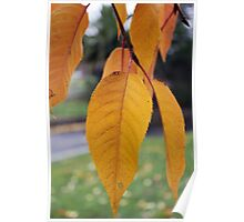 Yellow Autumn Leaves Poster