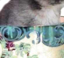 Cat in the Cup Sticker