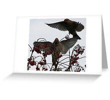 Waxwings Greeting Card
