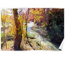 Guadalupe River Poster