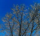 Snow on the trees by SWEEPER