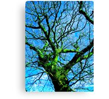 Old Man Moss Canvas Print
