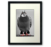 Red Eyed Pigeon Framed Print