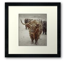 Highlands Snow Coo Framed Print