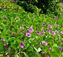 Purple Flowers on the Beach - Martinique, F.W.I. by Olivia Son