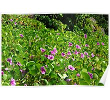 Purple Flowers on the Beach - Martinique, F.W.I. Poster