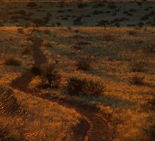 Seeing the unseen by Explorations Africa Dan MacKenzie