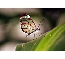 Wings like Glass Photographic Print