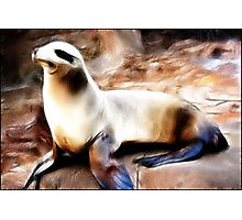 Silken Seal: Photographic Print