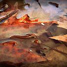 Autumn  by Hazel Dean