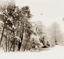 Sepia Storm by Jessica Jenney
