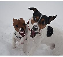 Romping in the snow Photographic Print