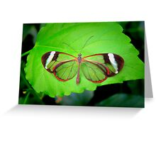 THE BEAUTY OF OPEN GLASSWINGS Greeting Card