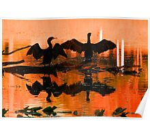 Silhouetted cormorants in a florida sunset Poster