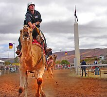 Camel Cup - Northern Territory by zitavaf