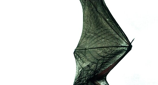 Bat wing by madworld