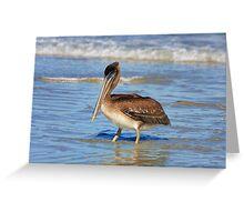 Pelican Wade Greeting Card
