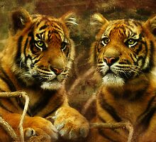 Little Sumatrans Aceh and Indrah by Trudi's Images