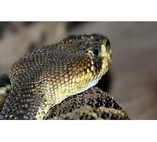 Eastern Diamond Back at Lowry Park Zoo Photographic Print