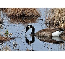 Mirror Mirror On the Pond.... Photographic Print