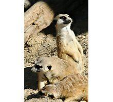 Meekats II at Lowry Park Zoo Photographic Print