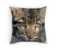 Clouded Leopard at Lowry Park Zoo Throw Pillow