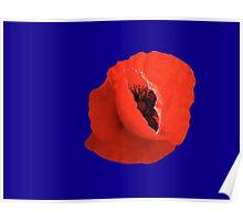 Poppy On Blue Poster