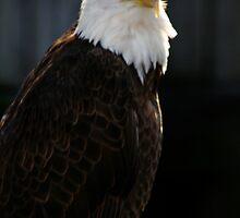Majestic Freedom II by Sheryl Unwin